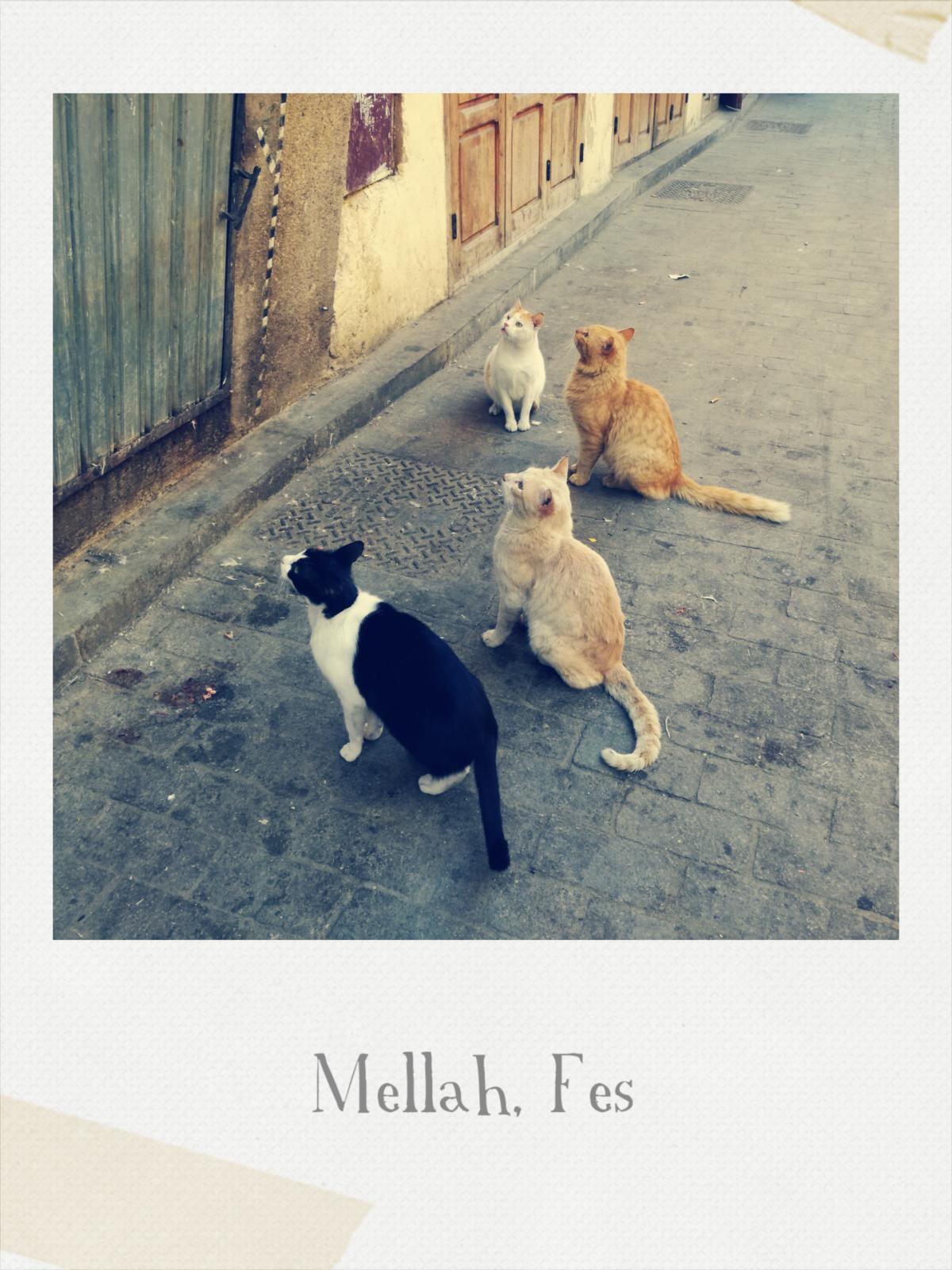 Mellah _ Fes, 22 febbraio